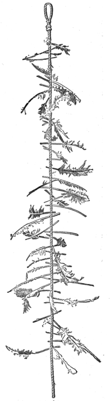 The Wellington Witch Ladder, wikipedia commons